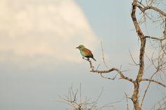 Wildlife, In This Moment, Bird, Game, Animals, Animales, Venison, Animaux, Birds