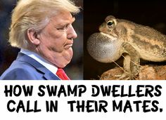 How Swamp Dwellers call in their mates. Fuck Trump & his swamp!