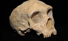 The Neanderthal genome included harmful mutations that made the hominids around 40% less reproductively fit than modern humans, according to estimates published in the latest issue of the journal GENETICS.