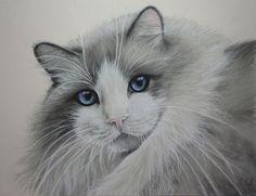 Pet portrait art, graphite pencil and pastel portraits by artist Karen Neal, New Zealand. Commissions.