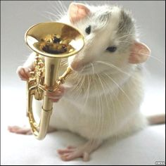 Musical rat on the tuba