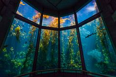 Monterey Bay Aquarium: I went here once when I was a kid, and it was really cool! I remember an awesome display with light-up jellyfish, among other things!
