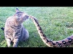 FEARLESS CATS 23 Badass Cats Who Will Amaze You [Funny Pets] - YouTube. [The cat on the hang glider is NOT cool.]