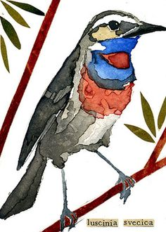 "watercolor, aceo, art card, ""Bluethroat"""