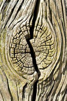 Gebarsten boomstam – Gone Gardening – Plant Details – Natural Forms Gcse, Natural Form Art, Natural Structures, Natural Shapes, Natural Texture, Organic Lines, Organic Form, Organic Structure, Texture Drawing