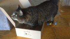 Sir Francis és a Doromb doboz