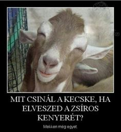 Got Goats? Gimme Goats, nothing but goats. Smiling Animals, Happy Animals, Farm Animals, Funny Animals, Cute Animals, Funny Animal Pictures, Funny Photos, Hd Photos, Funny Images