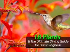 18 Plants And The Ultimate Dining Guide for Hummingbirds