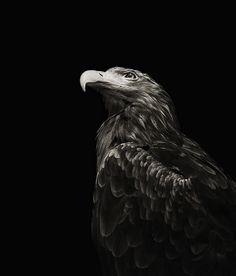 Tumblr  Photography  Black  White  Black & White  Animal