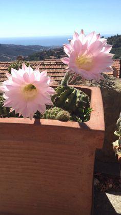 #italia #flowers #liguria #beautiful