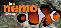 Turning a child's enthusiasm into a lasting hobby requires a realistic understanding of what keeping a clownfish in a marine aquarium setup really involves. Saltwater Aquarium Fish, Saltwater Tank, Aquarium Setup, Marine Aquarium, Clownfish, Architecture Quotes, Ocean Creatures, Exotic Fish, Finding Nemo