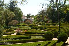 Jardim Botânico da Ajuda, Lissabon, Portugal  http://www.florilegium.de/blog/gaerten/botanischer-garten-von-ajuda-bei-belem-lissabon-portugal.html