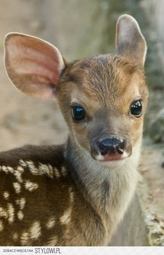 cutest animals / baby na Stylowi.pl