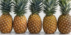 The mighty #pineapple takes 3 years to mature and is a #berry. No wonder our Pineapple Ancho Chile pork rinds are so good! Dive into the #yum!  #Snacks #Protein #Foodie #CraftBeer #FitFoodies #PorkRind #PorkRinds #Fun #Delicious #Snack #Workout #rig #truck #trucking #trucker #truckingcompanies #truckerlife #womenintrucking #truckdriver #4charity #charity #truckdriverappreciationweek #RigOnTheRoad