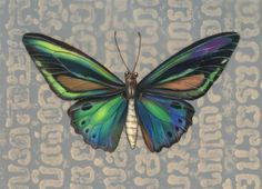 """Priamus Birdwing Butterfly"" - Original Fine Art for Sale - © Mindy Lighthipe"