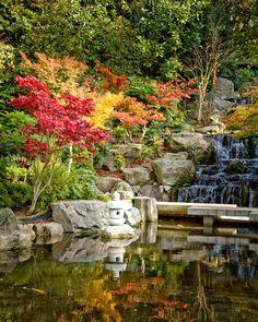 Holland Park, Kensington, London. The Japanese garden in autumn.