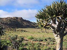succulent karoo biome - Google Search Biomes, Dream Garden, Biology, Vineyard, Succulents, Google Search, Outdoor, Outdoors, Vine Yard