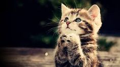 Image result for cool cute animal backgrounds