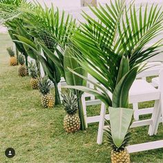 Pineapples and palms Tropical Wedding Theme Tropical Wedding Ideas Tropical Wedding Inspiration Tropical Wedding Styling Tropical Wedding Ceremony Tropical Wedding Reception Tropical Wedding Destination Wedding Tropical Wedding Reception, Hawaii Wedding, Wedding Ceremony, Wedding Venues, Wedding Beach, Beach Weddings, Reception Ideas, Palm Wedding, Trendy Wedding