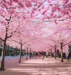 Avenida de los Cerezos , Alemania