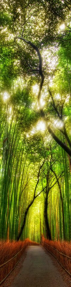 The way of a bamboo, Arashiyama, Kyoto, Japan