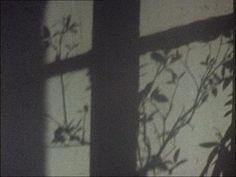 Anne-Marie Faux, Hic rosa, partition botanique (2007)