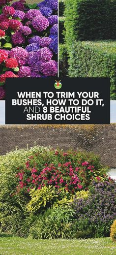 We show you how and when to trim bushes in your garden, and give a few shrubbery recommendations to help you plan and care for your landscaping.