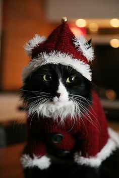 Not a happy Santa.           ••••(KO) Likes Santa, likes the presents and the Christmas dinner. Hates the Santa suit.