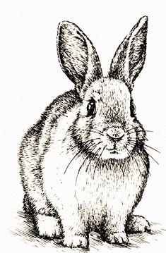 Black And White Rabbit, Black And White Drawing, Rabbit Drawing, Rabbit Art, Rabbit Illustration, Illustration Art, Bunny Art, Bunny Bunny, Bunnies