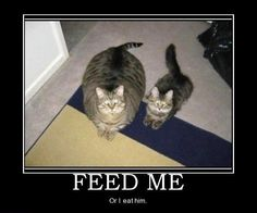omg, this is totally my 2 cats... except the little one is starting to get bigger :)