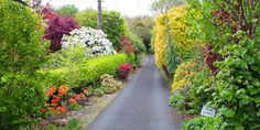 Welcome to Knockpatrick Gardens - a 90 year old Irish farmhouse garden. Old Irish, Farmhouse Garden, Luck Of The Irish, Beautiful Gardens, Ireland, Country Roads, Plants, Cow, Irish