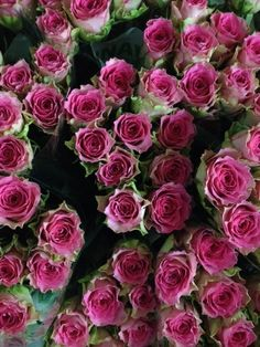 Rose 'Times Square'. Sold in bunches of 20 stems from the Flowermonger the wholesale floral home delivery service.