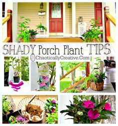 Shady Porch Plants... tips on how to pick the best plants for your container garden in the shade! www.chaoticallycreative.com