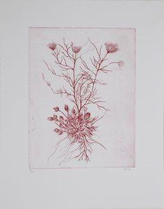 Cathrine Raben Davidsen Format 38 x 48 cm, Oplag 20 Kobbertryk Rabe