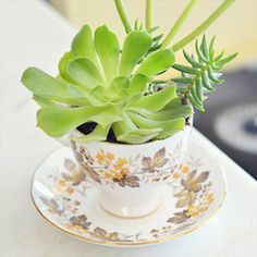 Find out how to get succulents for FREE and make this planter!  It's a super-easy project or gift and can be made with only a few dollars.