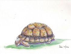 Original Painting Tortoise Animal art Watercolors Wall Art Gift Art Affordable For Gifting Three Tortoises by ArtbyAshaa on Etsy