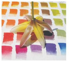 Color Curriculum - Choosing Your Own Palette | American Society of Botanical Artists