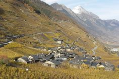Plan-Cerisier  Plan-Cerisier - Martigny - Valais  Au milieu des vignes, le hameau de Plan-Cerisier.  http://www.numerimages.ch