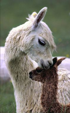 Just the sweetest animals                                                                                                                                                                                 More