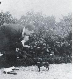 chihuahua meets Raymond Roussel