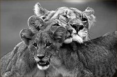 UN animal tan bello debe vivir en libertad, porqué algunos se empeñan en encarcelarlos? Preciosa la imagen