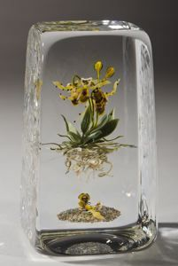 Paul Stankard (Attleboro, Massachusetts, 1943 - ) Ophry orchid with bees from the Botanical Series , 1992  Glass 5 1/4 in. x 2 7/8 in. x 2 1/2 in. Collection of the Akron Art Museum. Gift of Annie and Mike Belkin