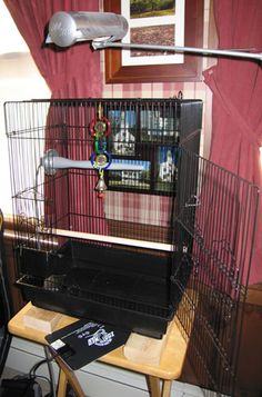 Wish List For Prim On Pinterest Parakeets Parakeet Cage And Activity Centers