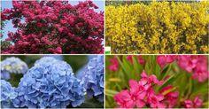 La poda de arbustos con flor es muy importante