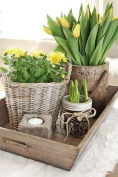 Yellow tulips and other spring flowers in pretty arrangement Deco Floral, Spring Home, Happy Spring, Hello Spring, Deco Table, Spring Flowers, Spring Blooms, Diy Flowers, Fresh Flowers