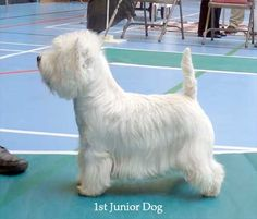 1st JD...nothing like a good kiltie haircut.  What a great looking dog.