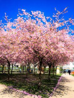 Spring has sprung !