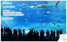 Today's Photo From Okinawa #Today_Photo with Jin Air #jinair #Okinawa #okinawa #진에어 #오키나와 #재미있게지내요 #재미있게진에어