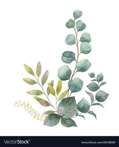 Watercolor vector bouquet with green eucalyptus leaves and branches. Spring or s… Watercolor vector bouquet with green eucalyptus leaves and Eucalyptus Bouquet, Eucalyptus Leaves, Eucalyptus Wedding, Watercolor Leaves, Watercolor Flowers, Watercolor Paintings, Whats Wallpaper, Watercolor Illustration, Autumn Illustration