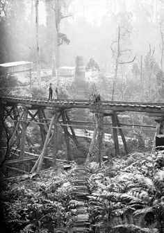 Powell Town - A man on a trestle bridge over a ferny gully. There are buildings in the background.